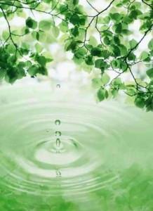 ветви берёзы над водой