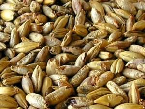 зерно для солода