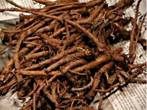 корни одуванчиков