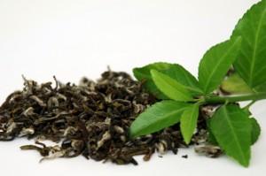 свежие и высушенные чайные листочки