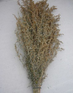 сушёная полынь