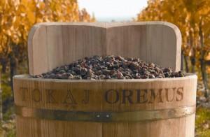 токайский виноград