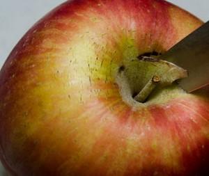очищаемое яблоко