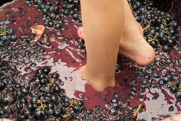 Виробив вино - торгуй оптом  без ліцензії